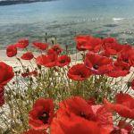 SIRIUS BEACH SPA APARTAMENTS: Фото - изображение 9